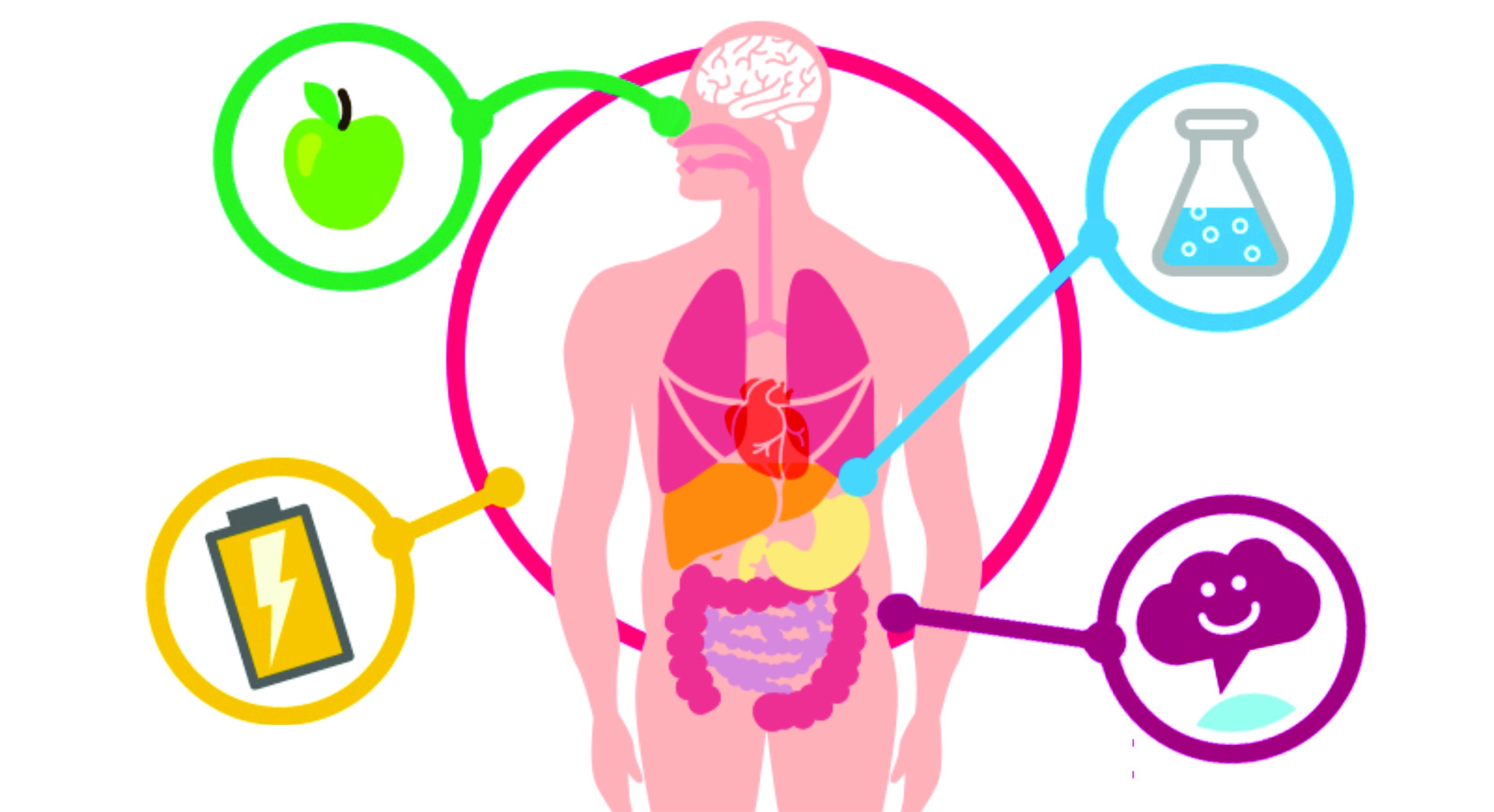 Resultado de imagem para metabolismo